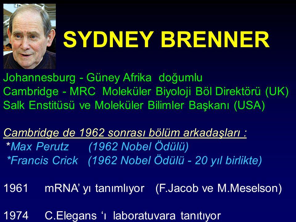 SYDNEY BRENNER Johannesburg - Güney Afrika doğumlu