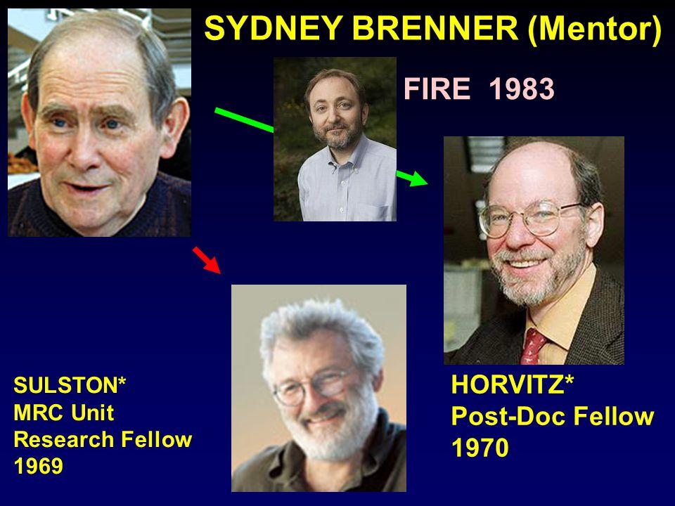 SYDNEY BRENNER (Mentor)