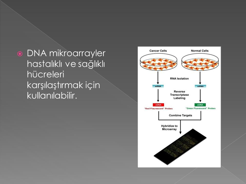 DNA mikroarrayler hastalıklı ve sağlıklı hücreleri karşılaştırmak için kullanılabilir.