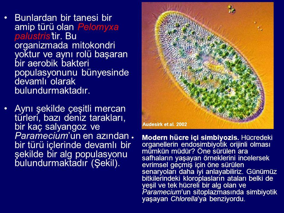 Bunlardan bir tanesi bir amip türü olan Pelomyxa palustris'tir