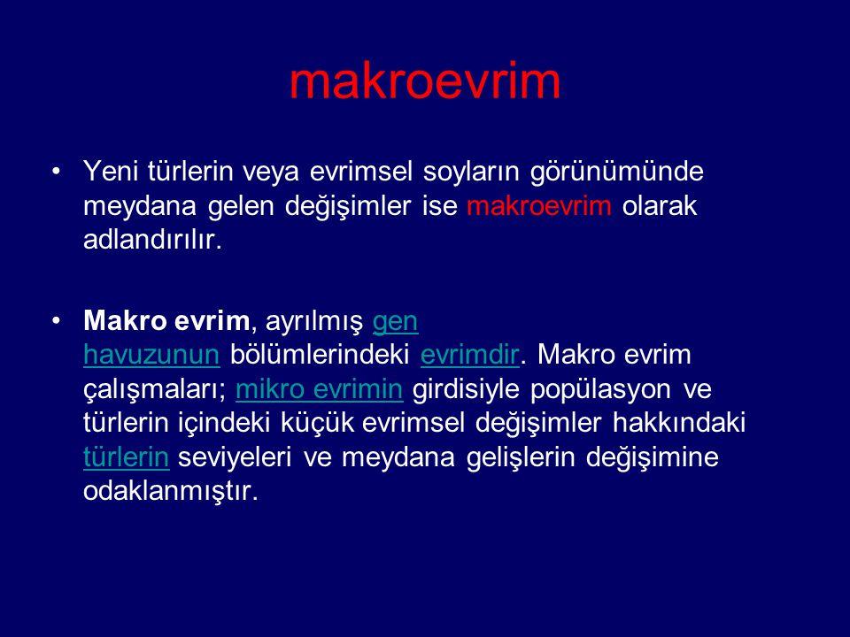 makroevrim Yeni türlerin veya evrimsel soyların görünümünde meydana gelen değişimler ise makroevrim olarak adlandırılır.