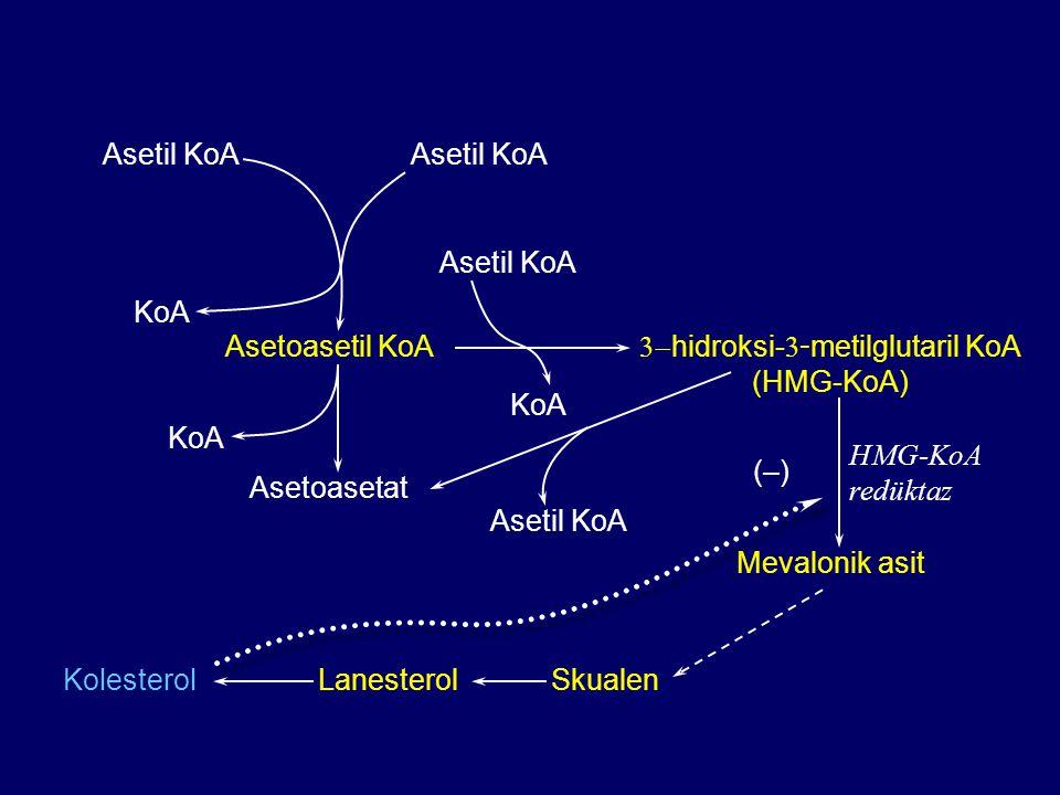 3-hidroksi-3-metilglutaril KoA (HMG-KoA)