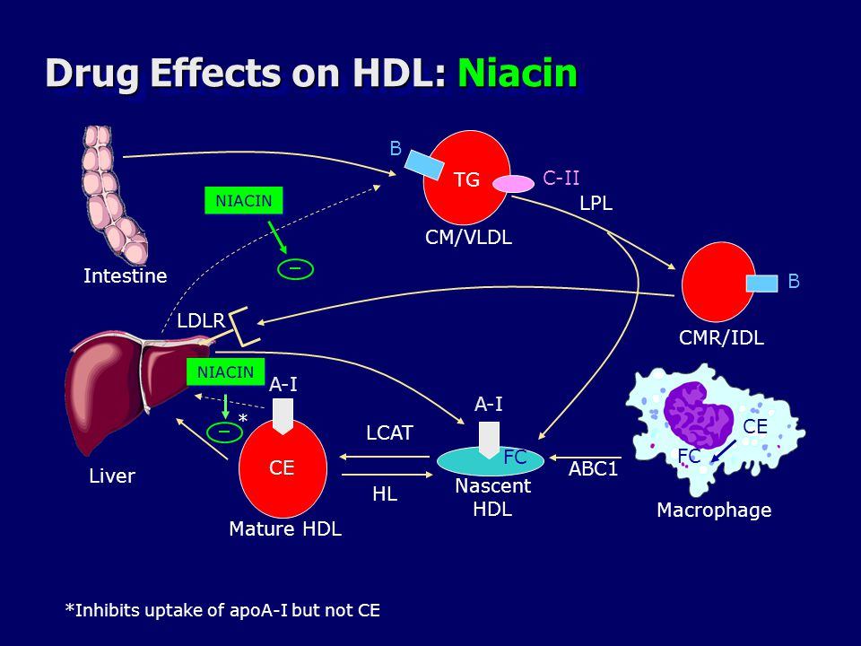 Drug Effects on HDL: Niacin
