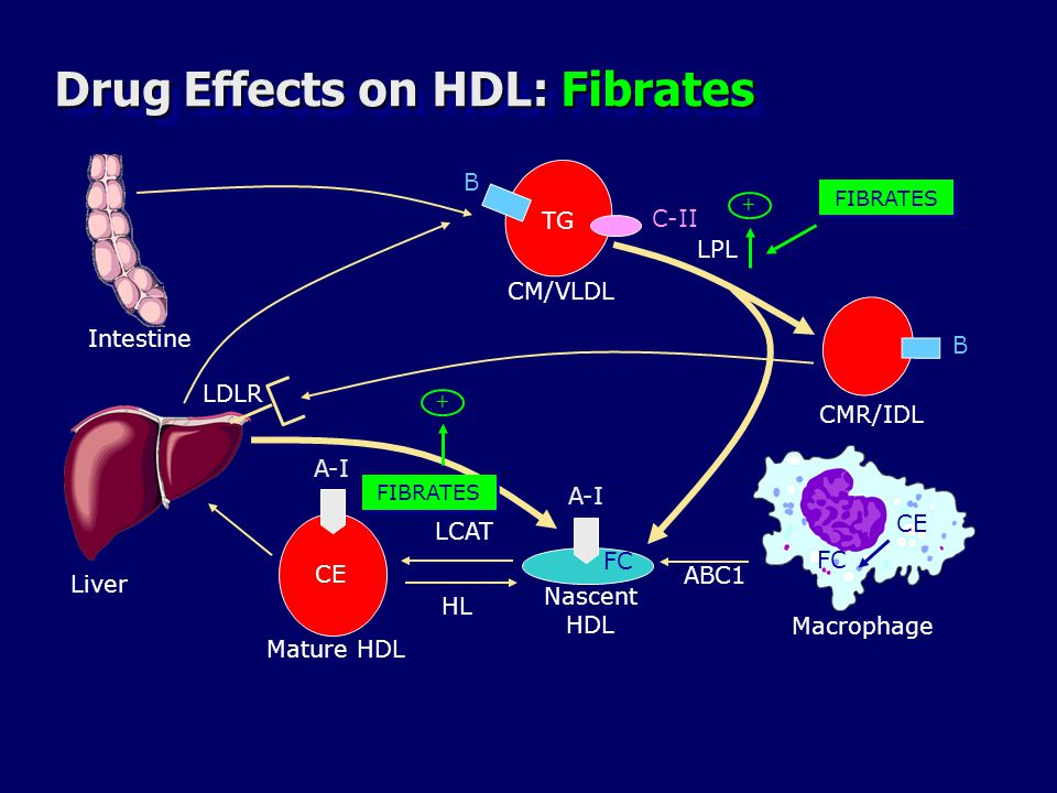 Drug Effects on HDL: Fibrates
