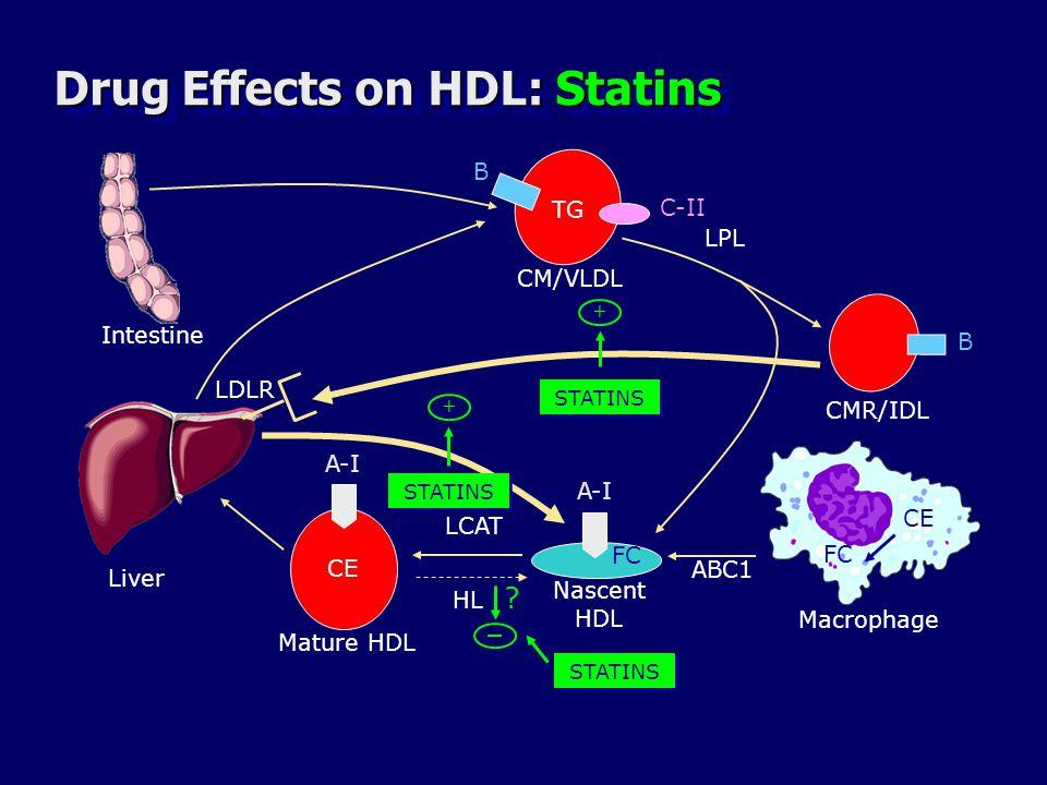 Drug Effects on HDL: Statins