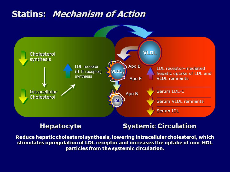 Statins: Mechanism of Action