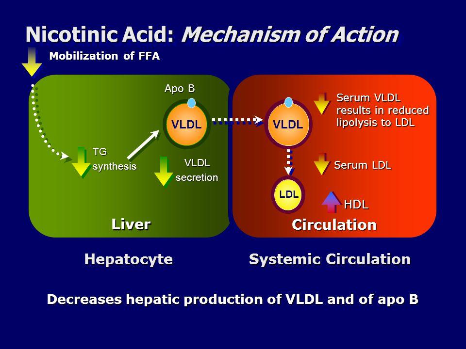 Nicotinic Acid: Mechanism of Action