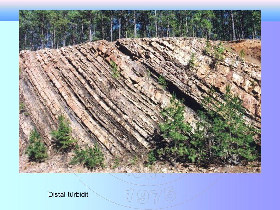 Distal türbidit