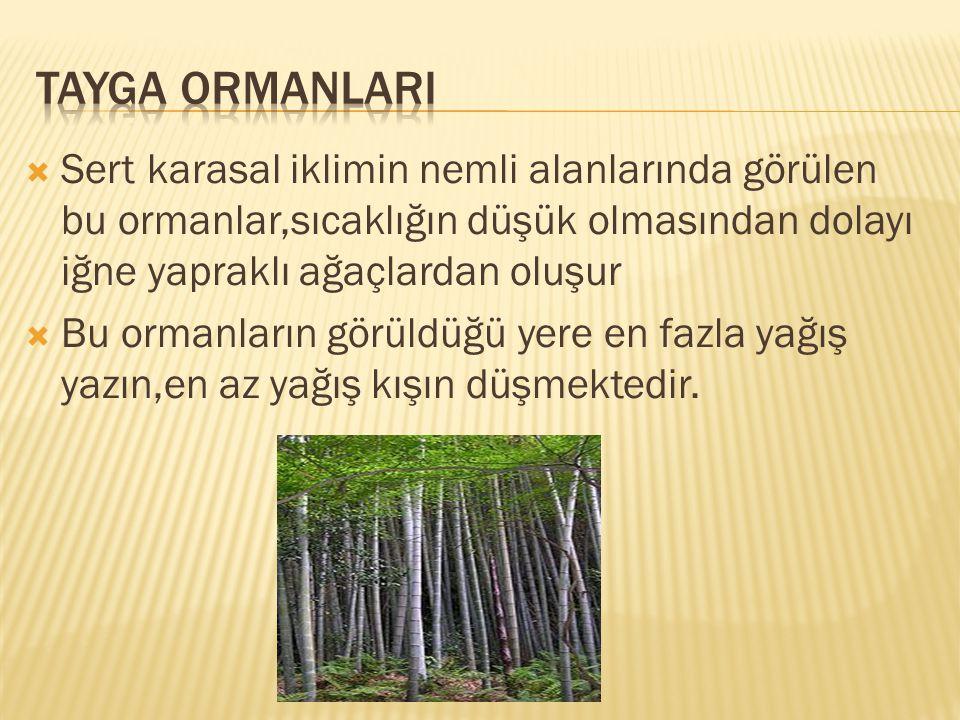 TAYGA ORMANLARI Sert karasal iklimin nemli alanlarında görülen bu ormanlar,sıcaklığın düşük olmasından dolayı iğne yapraklı ağaçlardan oluşur.