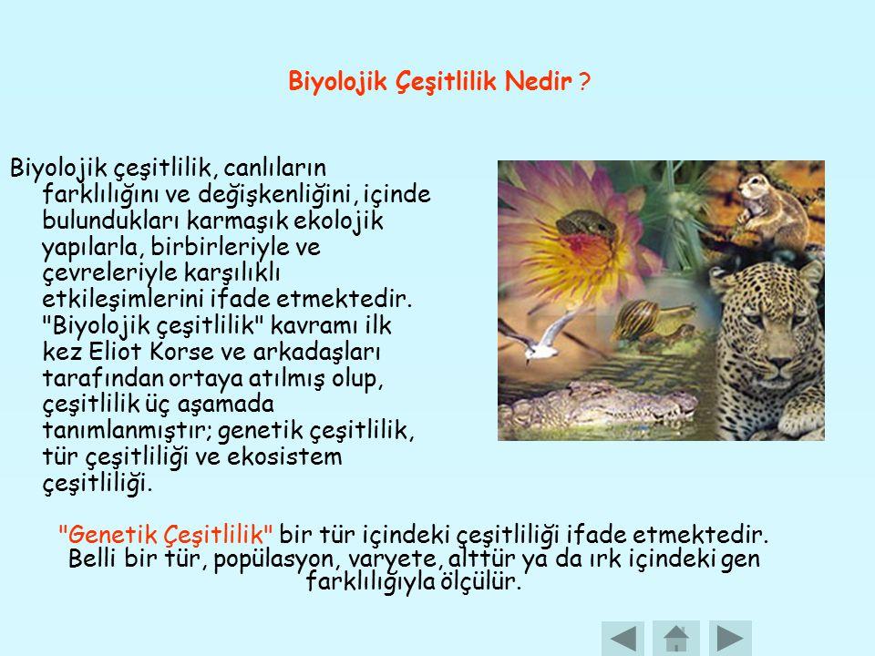 Biyolojik Çeşitlilik Nedir