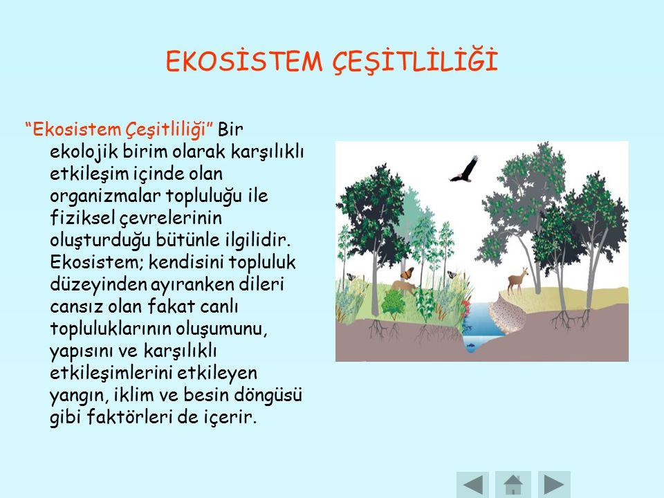 EKOSİSTEM ÇEŞİTLİLİĞİ