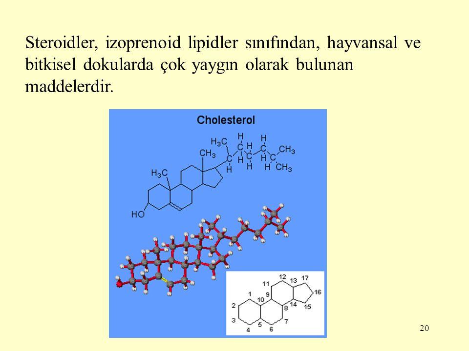 Steroidler, izoprenoid lipidler sınıfından, hayvansal ve bitkisel dokularda çok yaygın olarak bulunan maddelerdir.