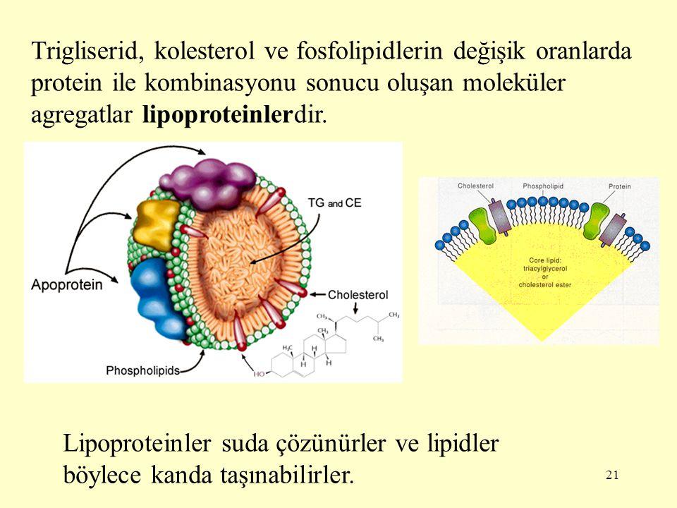 Trigliserid, kolesterol ve fosfolipidlerin değişik oranlarda protein ile kombinasyonu sonucu oluşan moleküler agregatlar lipoproteinlerdir.