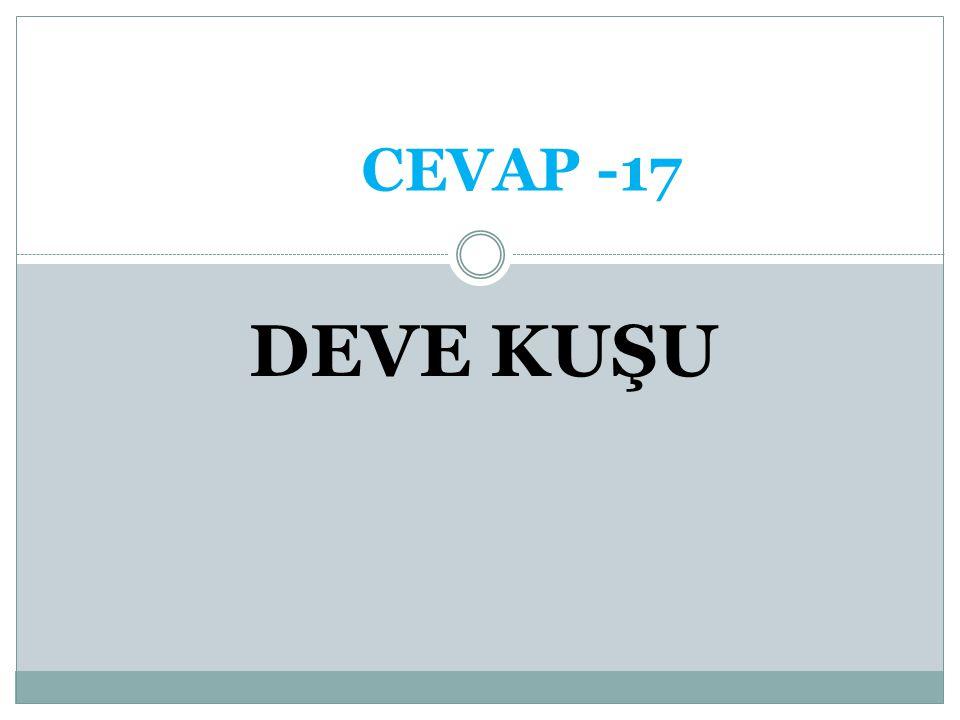 CEVAP -17 DEVE KUŞU