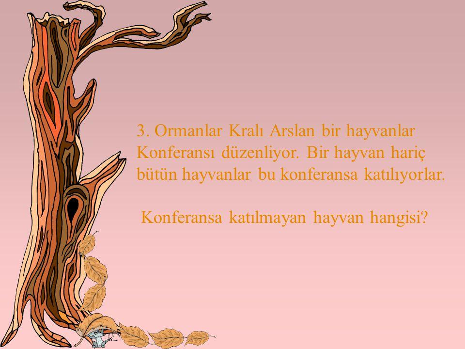 3. Ormanlar Kralı Arslan bir hayvanlar