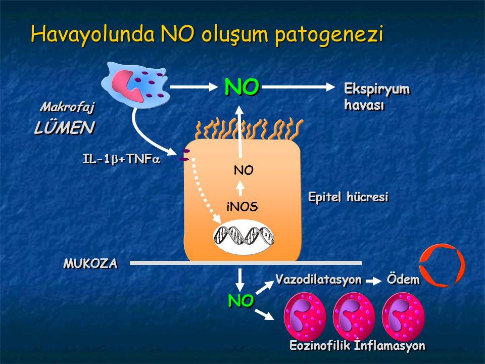 Havayolunda NO oluşum patogenezi