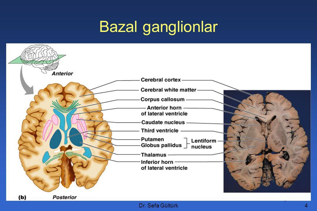Bazal ganglionlar Figure 12.11b Dr. Sefa Gültürk
