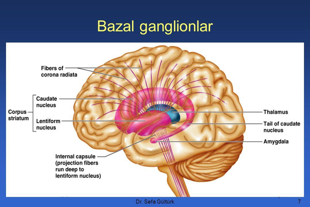 Bazal ganglionlar Figure 12.11a Dr. Sefa Gültürk