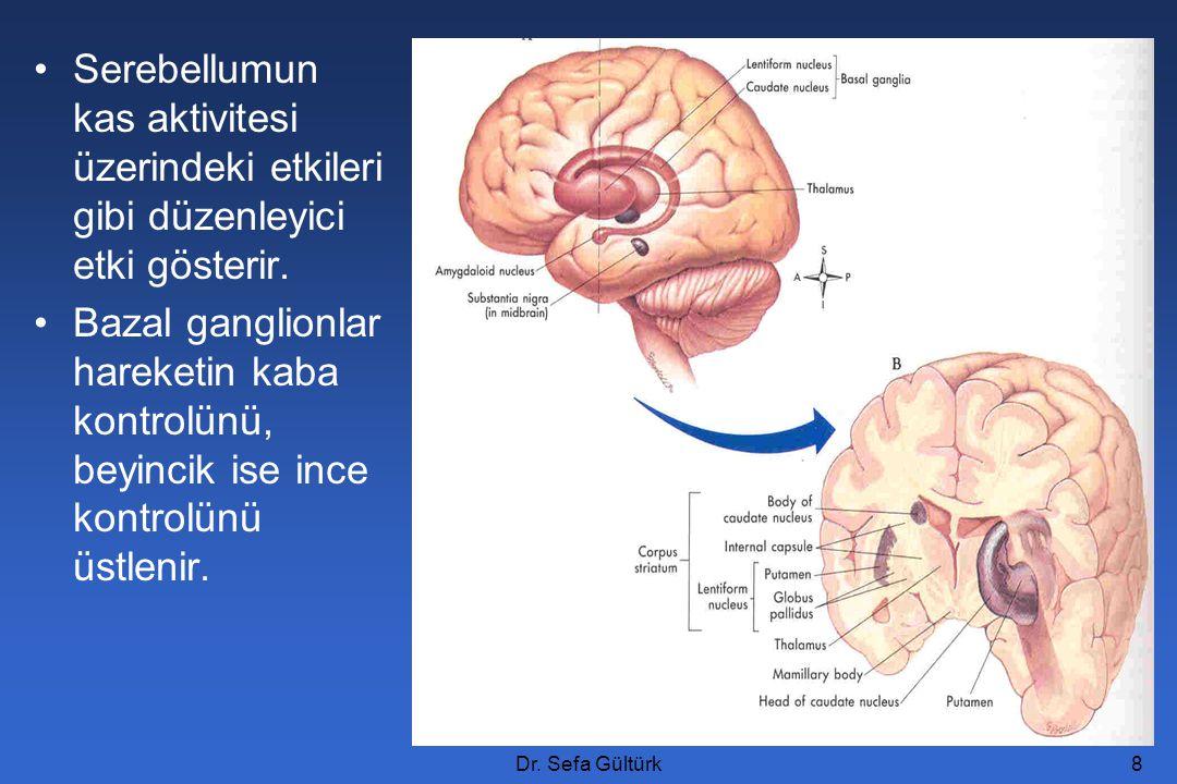 Serebellumun kas aktivitesi üzerindeki etkileri gibi düzenleyici etki gösterir.