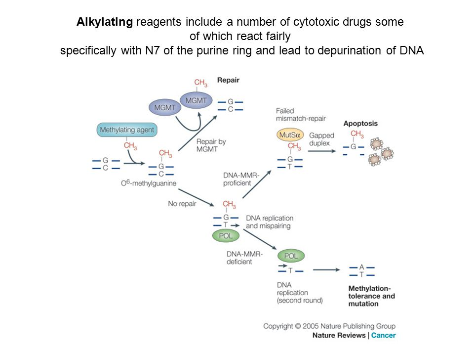 Alkylating reagents include a number of cytotoxic drugs some