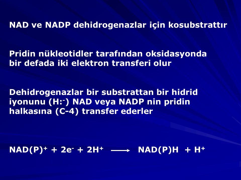 NAD ve NADP dehidrogenazlar için kosubstrattır