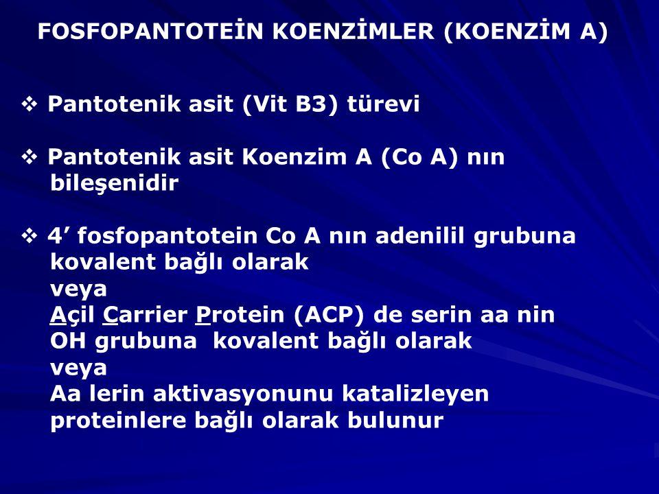 FOSFOPANTOTEİN KOENZİMLER (KOENZİM A)