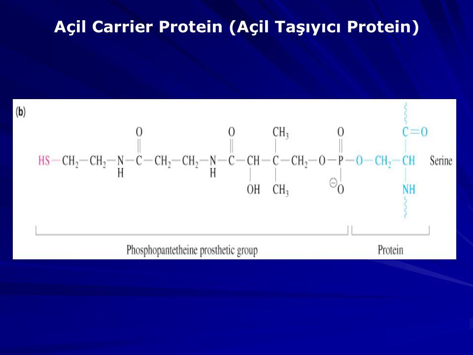 Açil Carrier Protein (Açil Taşıyıcı Protein)