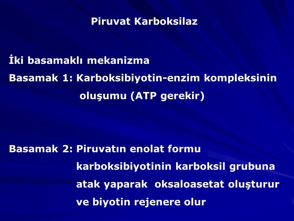 Piruvat Karboksilaz İki basamaklı mekanizma. Basamak 1: Karboksibiyotin-enzim kompleksinin. oluşumu (ATP gerekir)