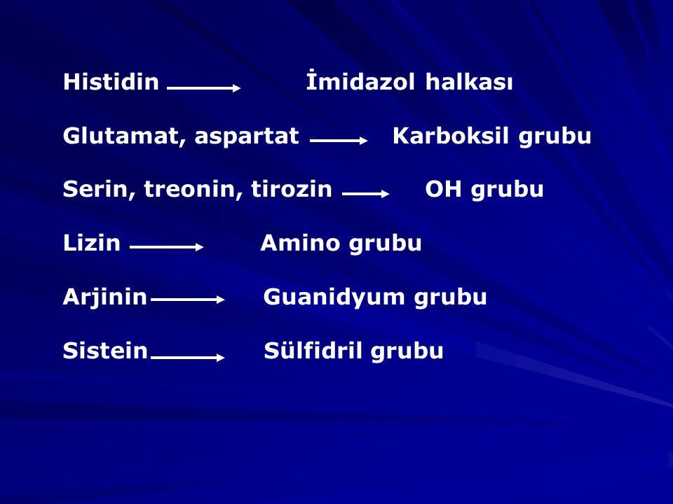 Histidin İmidazol halkası