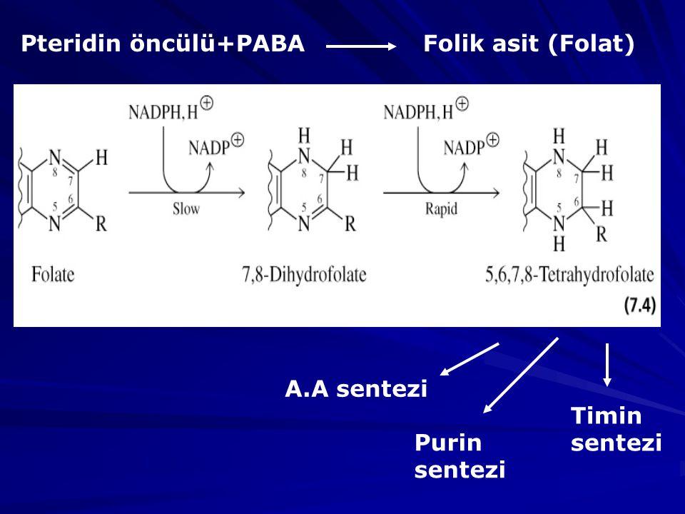 Pteridin öncülü+PABA Folik asit (Folat)