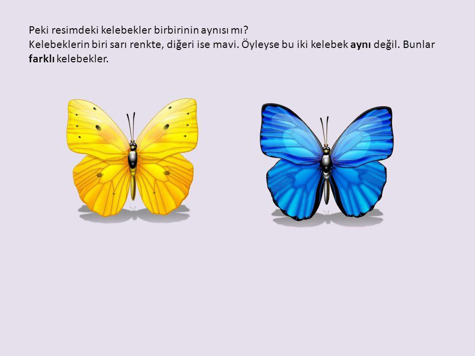 Peki resimdeki kelebekler birbirinin aynısı mı