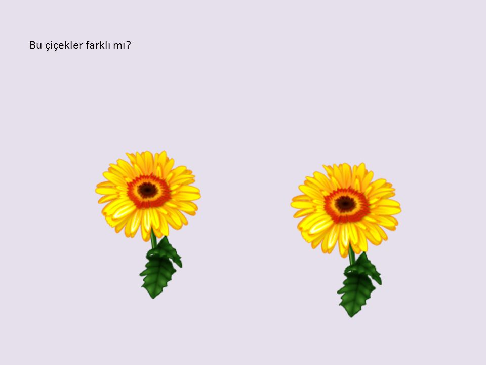 Bu çiçekler farklı mı