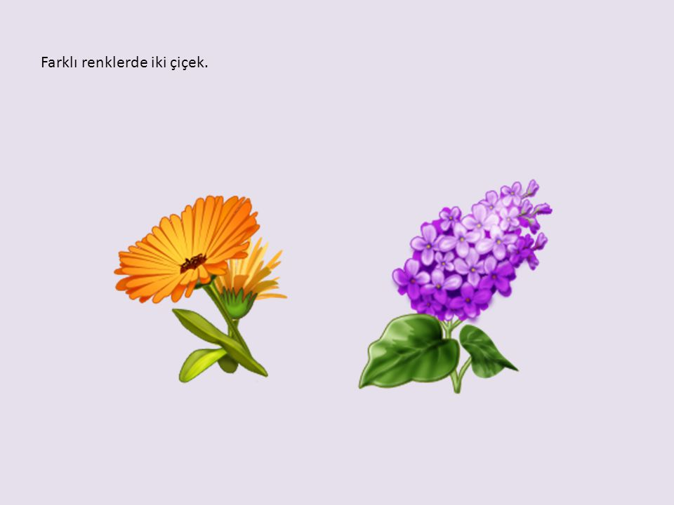 Farklı renklerde iki çiçek.