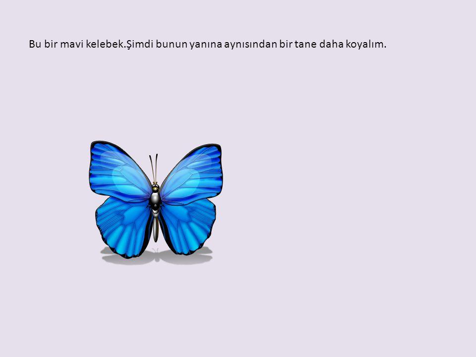 Bu bir mavi kelebek.Şimdi bunun yanına aynısından bir tane daha koyalım.
