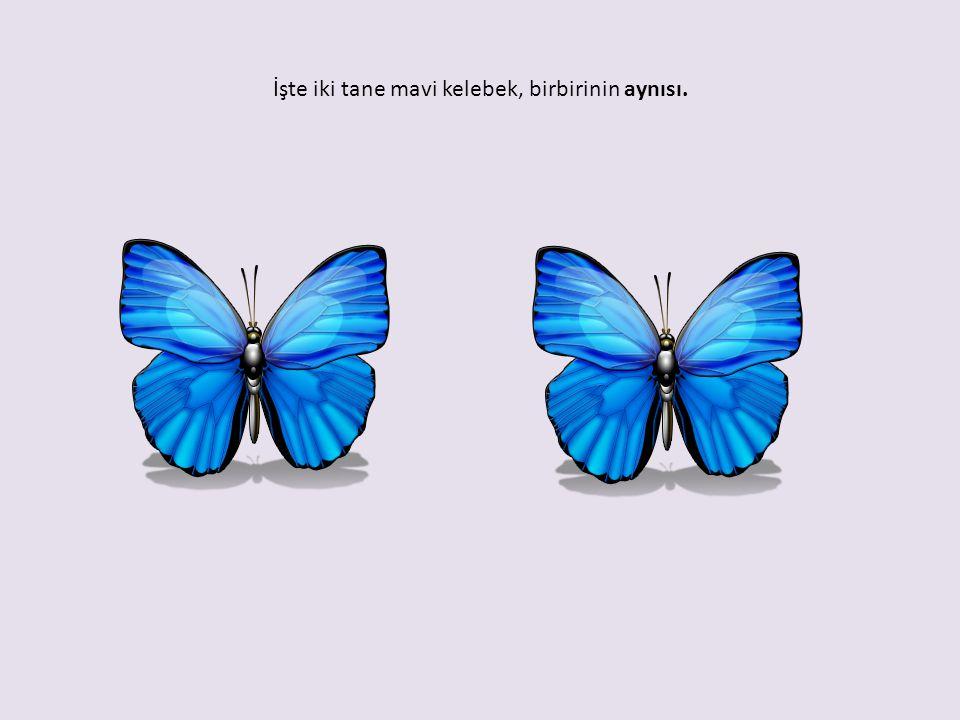 İşte iki tane mavi kelebek, birbirinin aynısı.