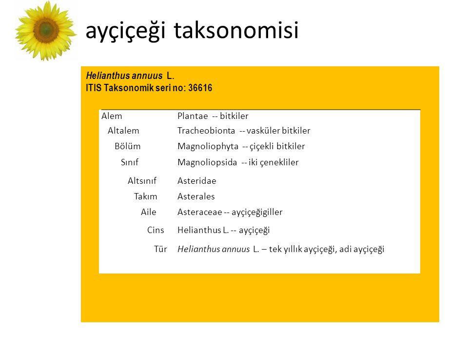 Helianthus annuus L. ITIS Taksonomik seri no: 36616