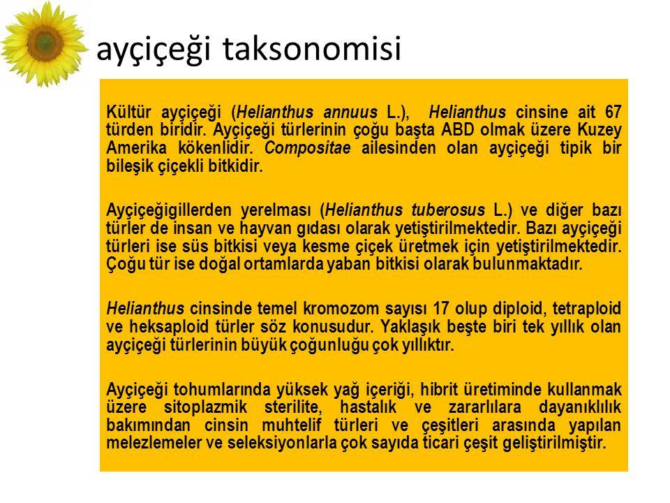 ayçiçeği taksonomisi