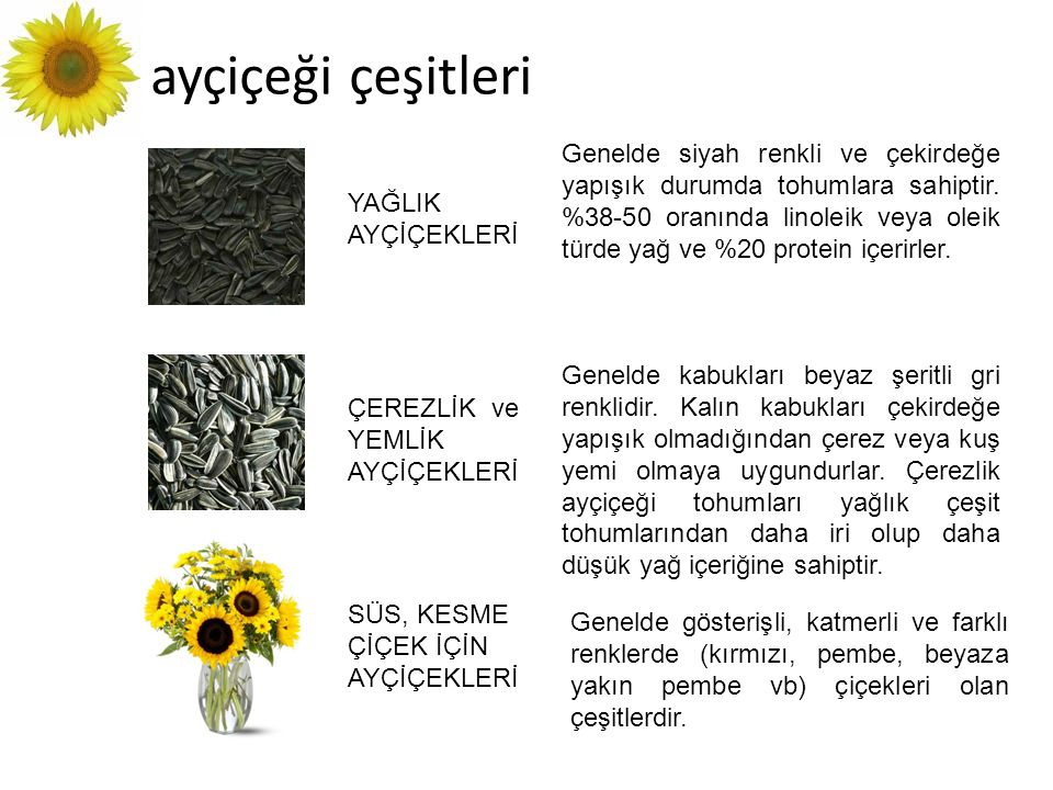ayçiçeği çeşitleri