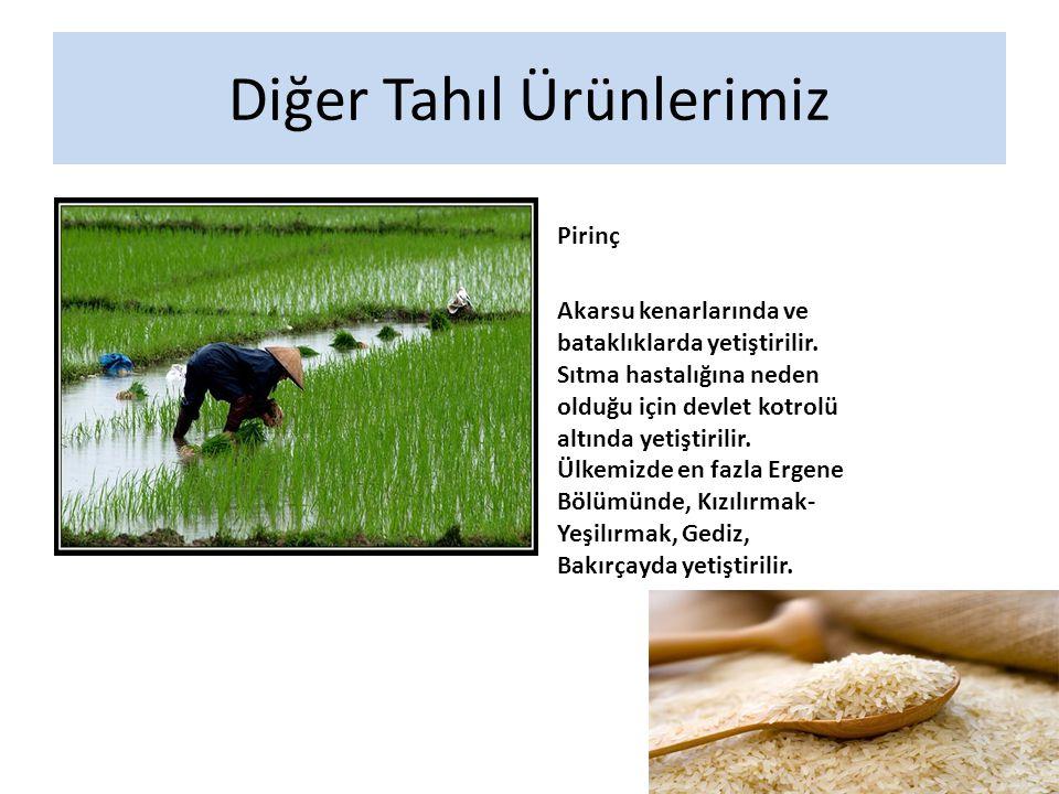 Diğer Tahıl Ürünlerimiz
