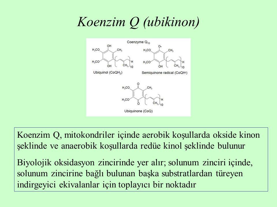 Koenzim Q (ubikinon) Koenzim Q, mitokondriler içinde aerobik koşullarda okside kinon şeklinde ve anaerobik koşullarda redüe kinol şeklinde bulunur.
