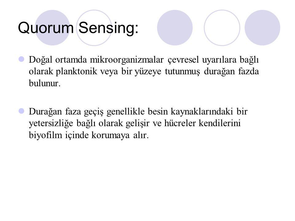 Quorum Sensing: Doğal ortamda mikroorganizmalar çevresel uyarılara bağlı olarak planktonik veya bir yüzeye tutunmuş durağan fazda bulunur.