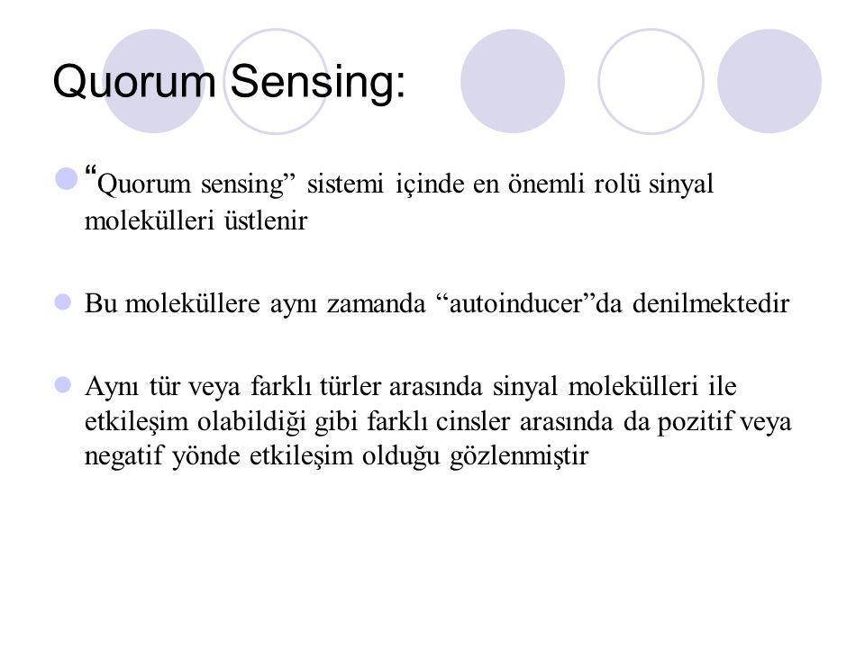 Quorum Sensing: Quorum sensing sistemi içinde en önemli rolü sinyal molekülleri üstlenir.