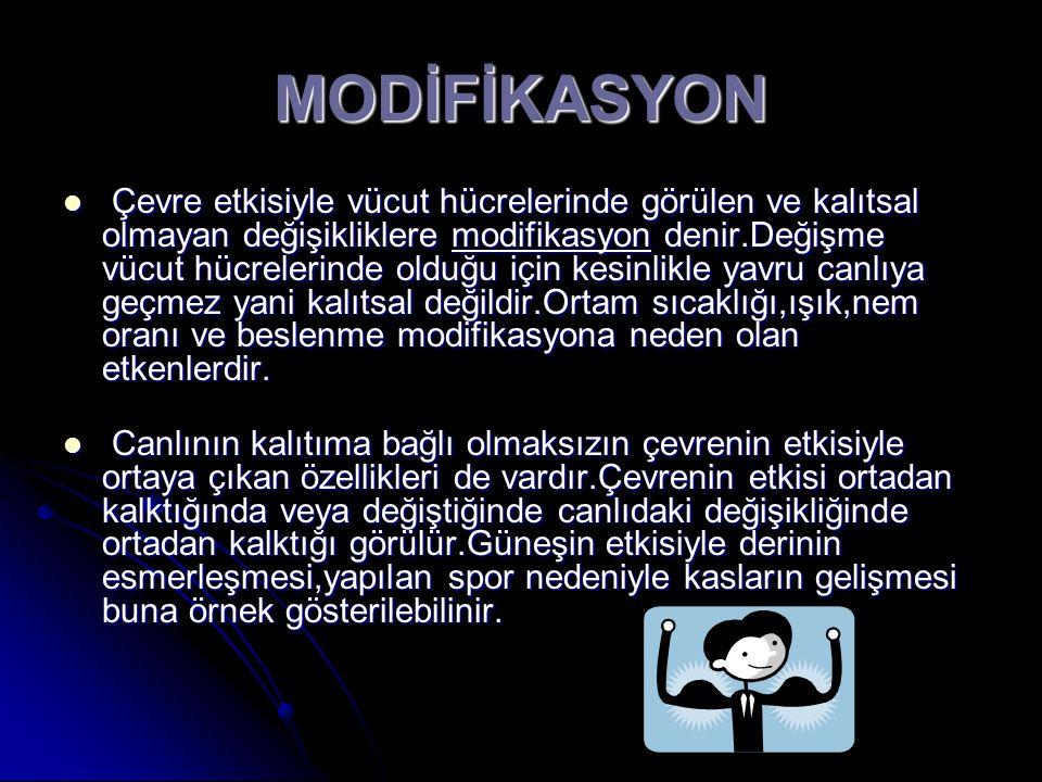MODİFİKASYON