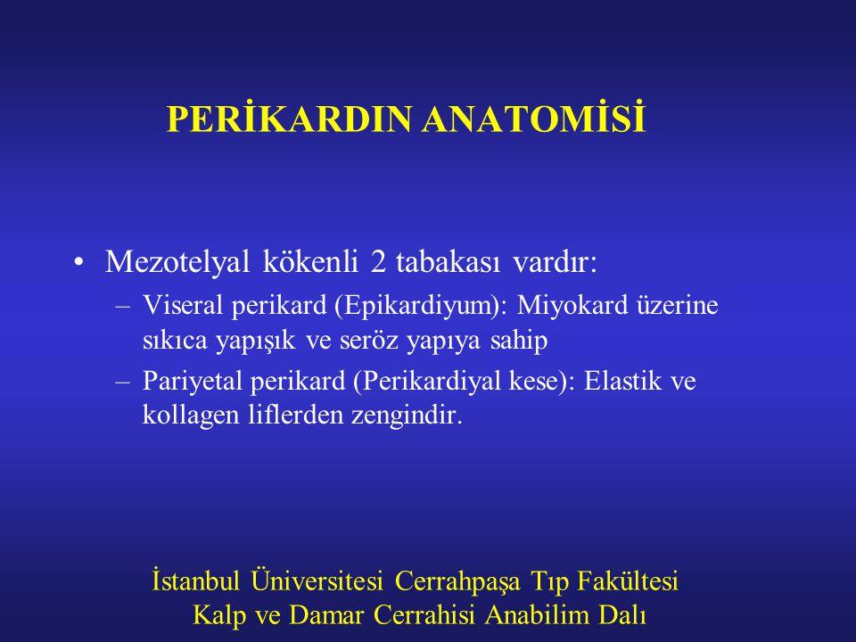 PERİKARDIN ANATOMİSİ Mezotelyal kökenli 2 tabakası vardır: