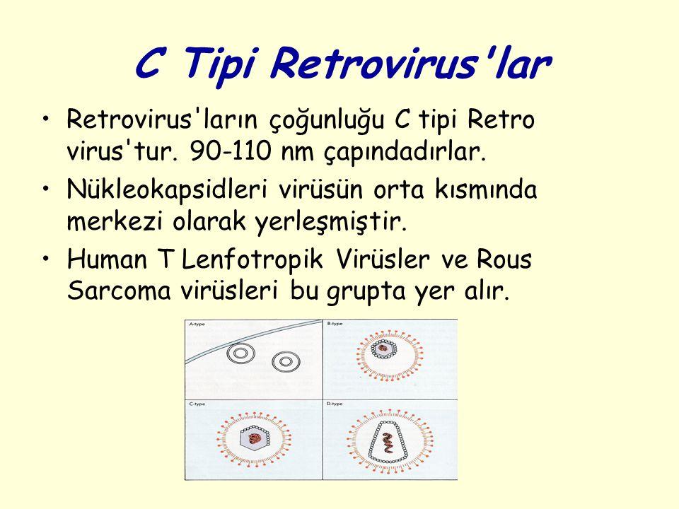 C Tipi Retrovirus lar Retrovirus ların çoğunluğu C tipi Retro virus tur. 90-110 nm çapındadırlar.