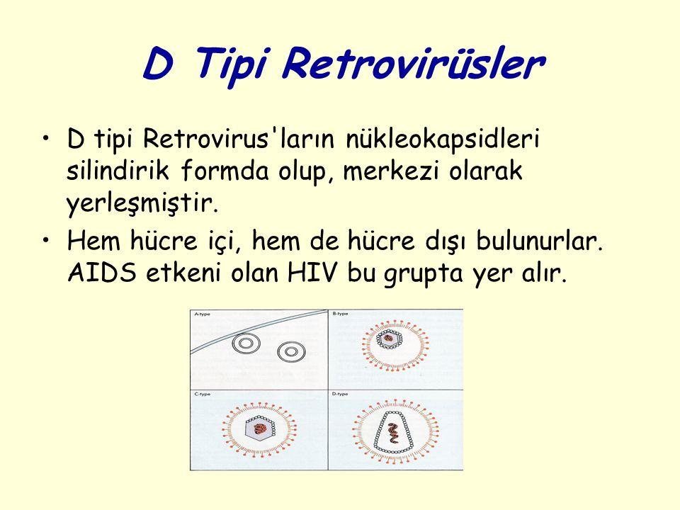 D Tipi Retrovirüsler D tipi Retrovirus ların nükleokapsidleri silindirik formda olup, merkezi olarak yerleşmiştir.