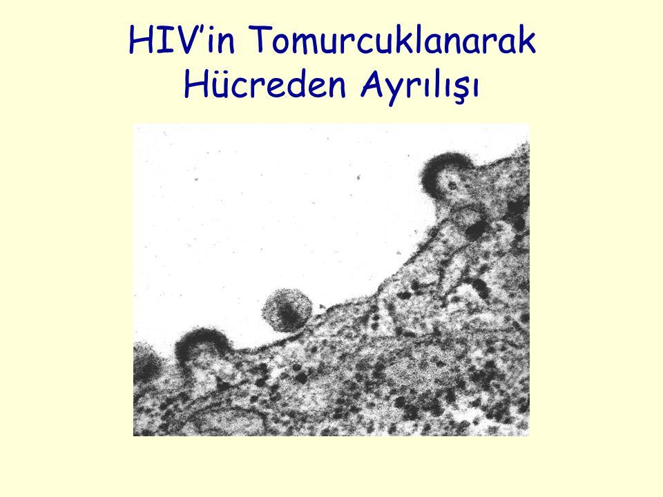 HIV'in Tomurcuklanarak Hücreden Ayrılışı