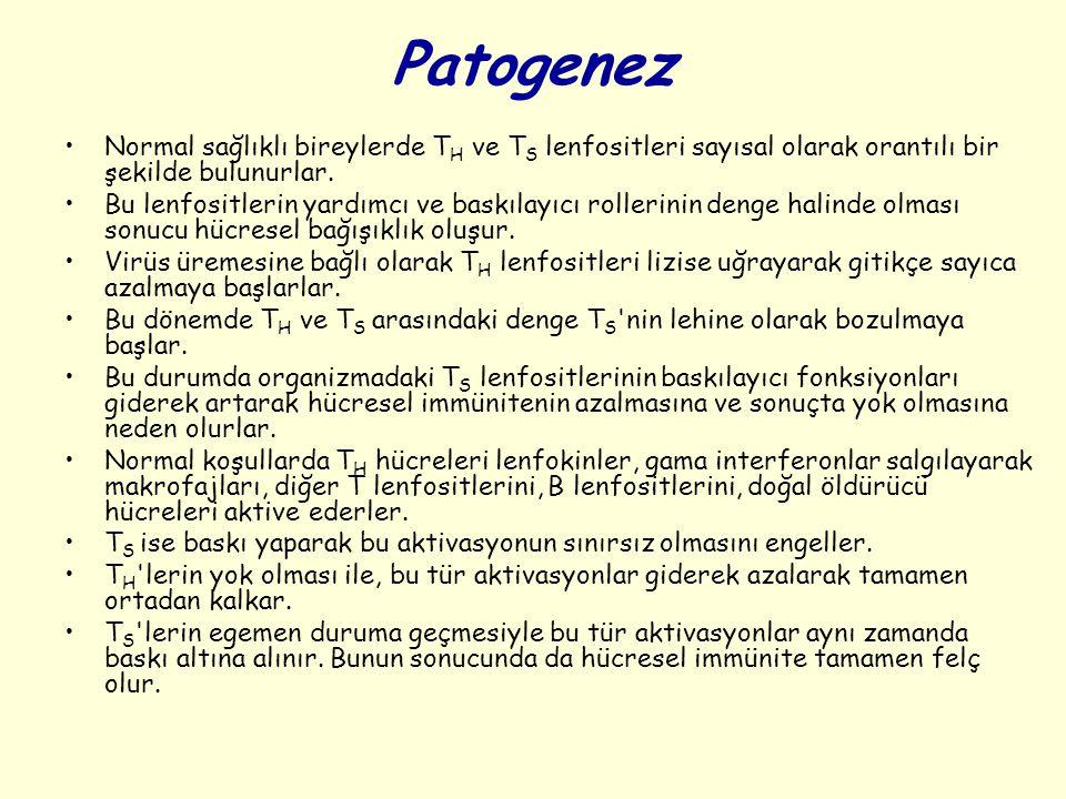 Patogenez Normal sağlıklı bireylerde TH ve TS lenfositleri sayısal olarak orantılı bir şekilde bulunurlar.