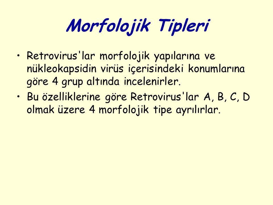 Morfolojik Tipleri Retrovirus lar morfolojik yapılarına ve nükleokapsidin virüs içerisindeki konumlarına göre 4 grup altında incelenirler.
