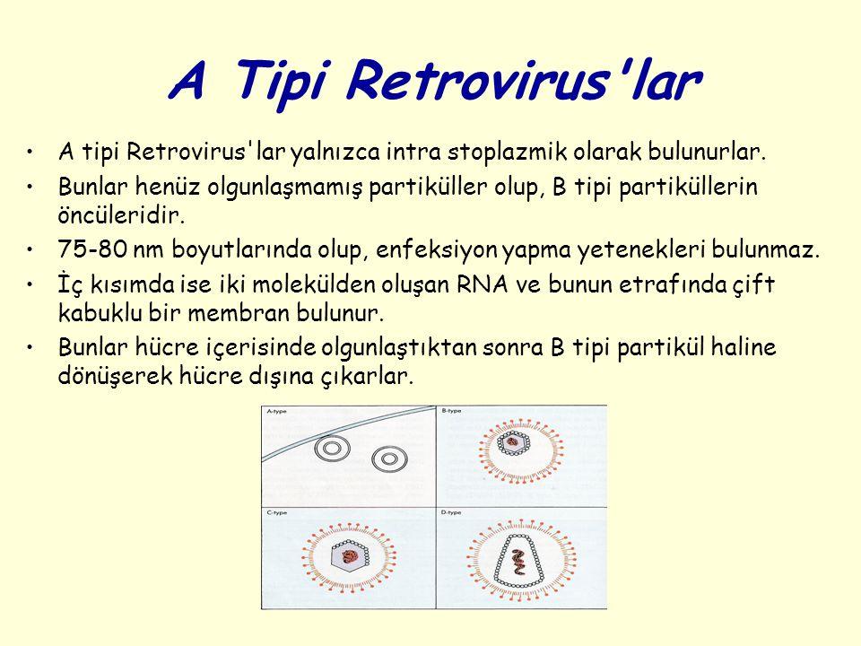 A Tipi Retrovirus lar A tipi Retrovirus lar yalnızca intra stoplazmik olarak bulunurlar.